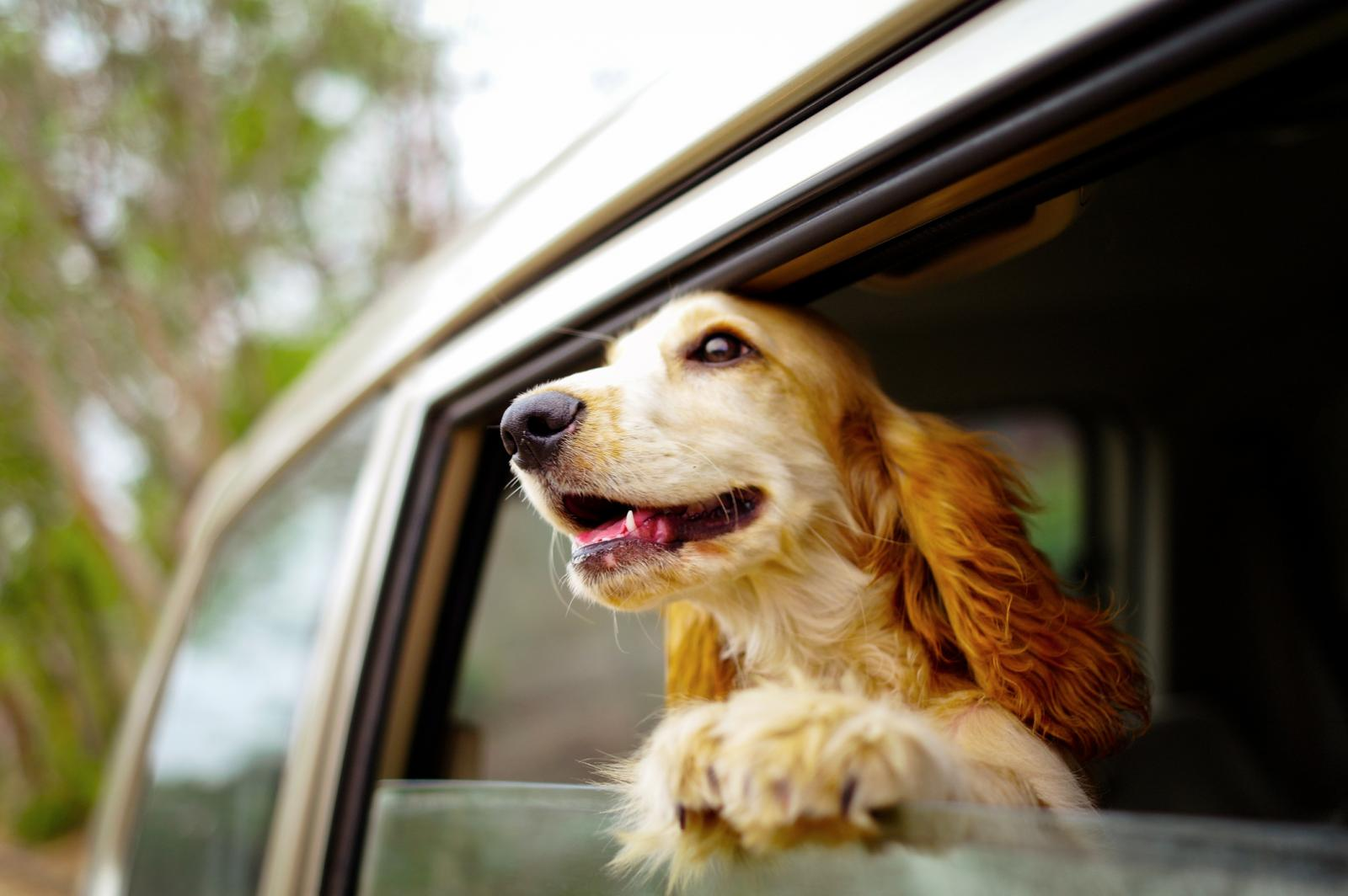 Love Vacationing With Your Pet? Here's How To Make It A Journey Great
