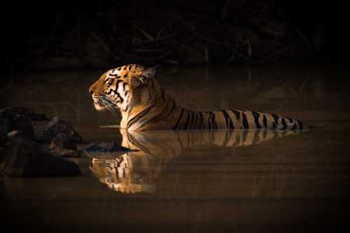 A Guide to India's Lesser Known Tiger Reserves